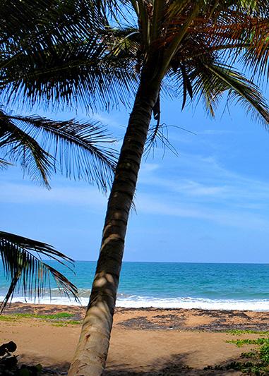 Playa Los Pinos