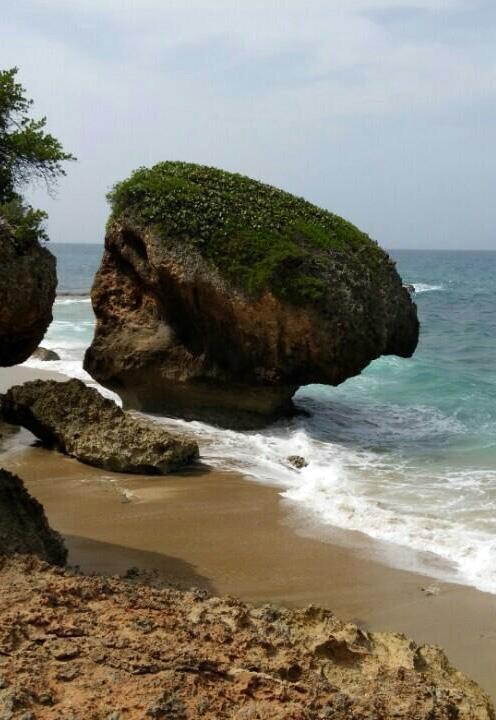 Playa Surfer
